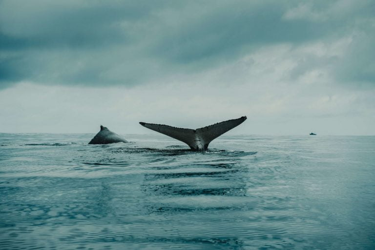 Report: Selling By Ethereum Whales Linked to ETH's Drop Below $200 12
