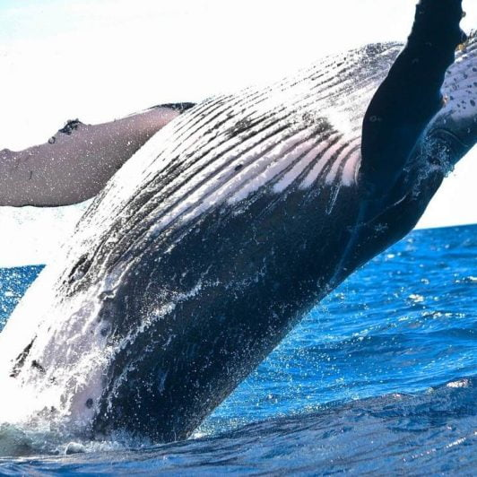 Bitcoin (BTC) Turns Bearish, Bitfinex Whale Reappears on Twitter 17
