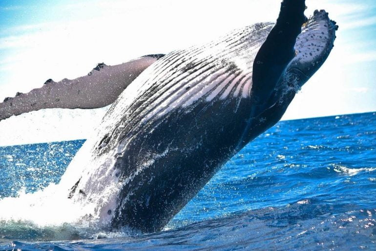 Bitcoin Whales Sold 50k BTC Worth $3B in the Last 5 Days 13