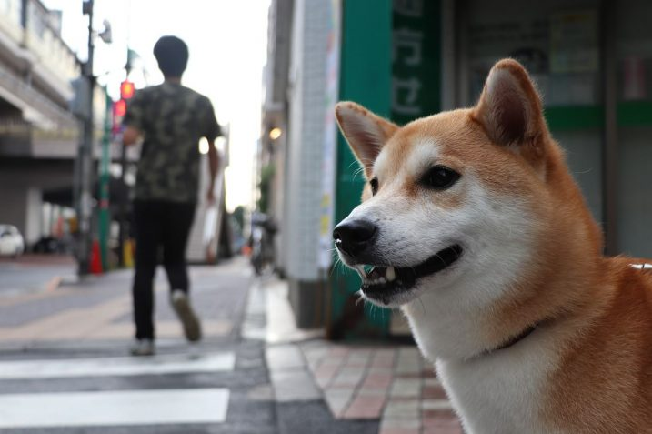 Dogecoin (DOGE) Could Have Hit an Important Top - John Bollinger 20