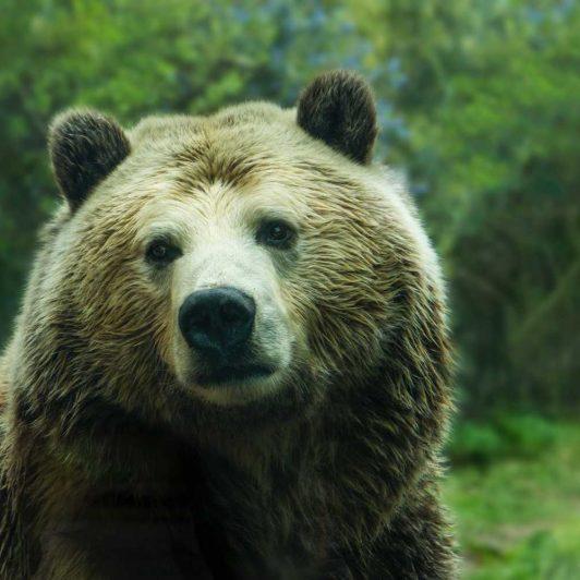 Bitcoin Failing to Recapture the 200-Day MA Points to a Bear Market 22