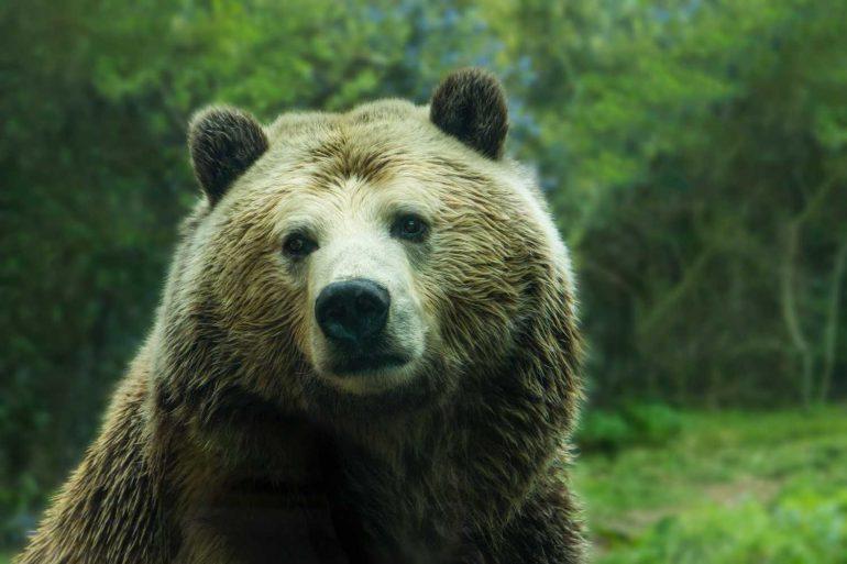 Bitcoin Failing to Recapture the 200-Day MA Points to a Bear Market 16